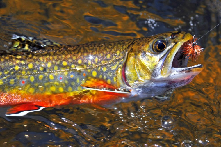 future of fly fishing