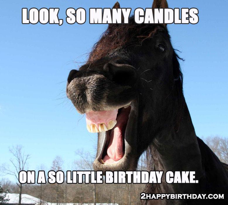 Happy Birthday Horse Meme Funny Songs 2happybirthday
