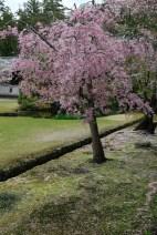 2langnasen_osaka_kyoto-5
