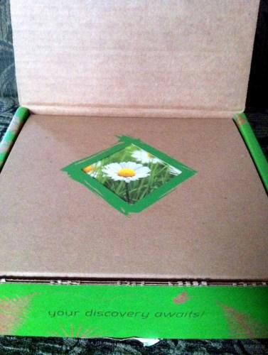 The box.