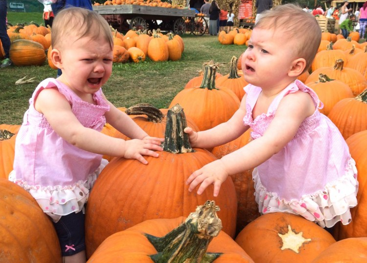 Pumpkin Festival with Two 1-Year olds: Expectations vs. Reality