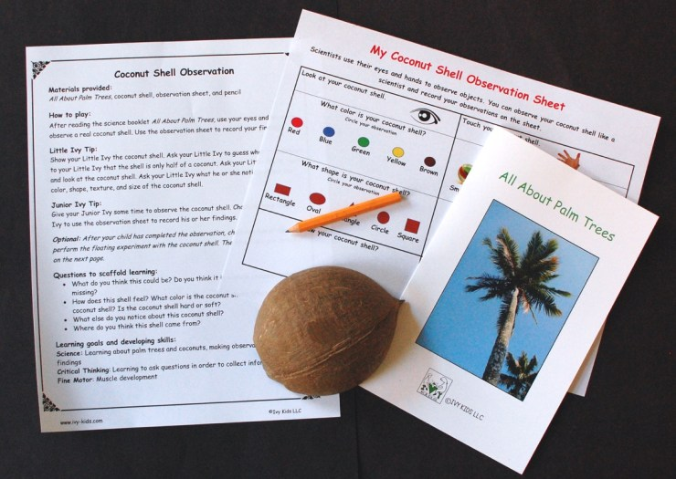Coconut Shell Observation