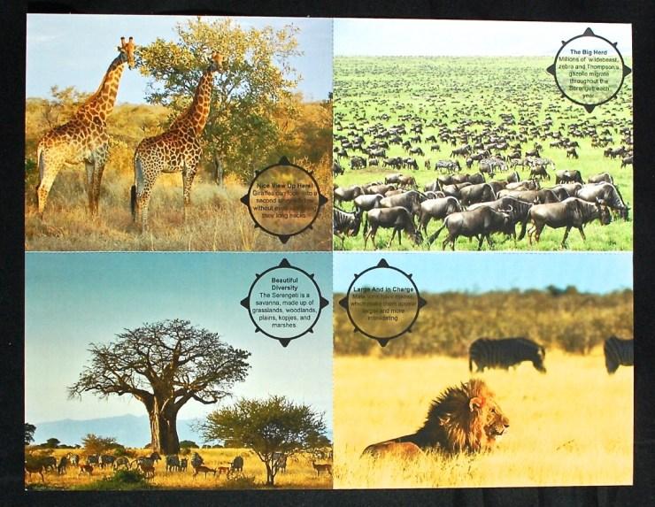 Junior Explorers postcards
