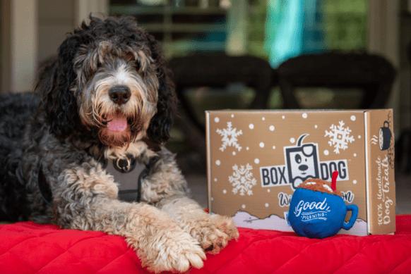 boxdog coupon