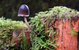 A tiny mushroom.
