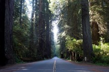 The cathedral-like scenery in Prairie Creek Redwoods State Park.