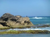 Cormorant on a rock.