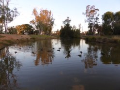 Duck Pond near our Caravan Park.