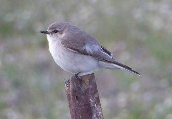 Little bird, Kidman's Camp