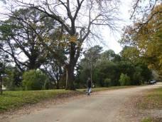 Colac Botanic Gardens