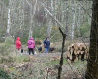 It seems that having a dog is compulsory if you want to walk in the forest.