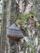 Wasp nest, I think.