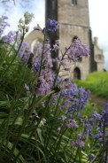 Dunster Church in bloom