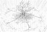Cursed Oak (4)