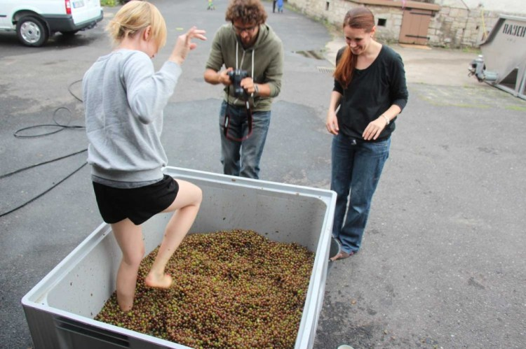 Melanie crushing the grapes