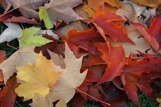 fall leaves 021