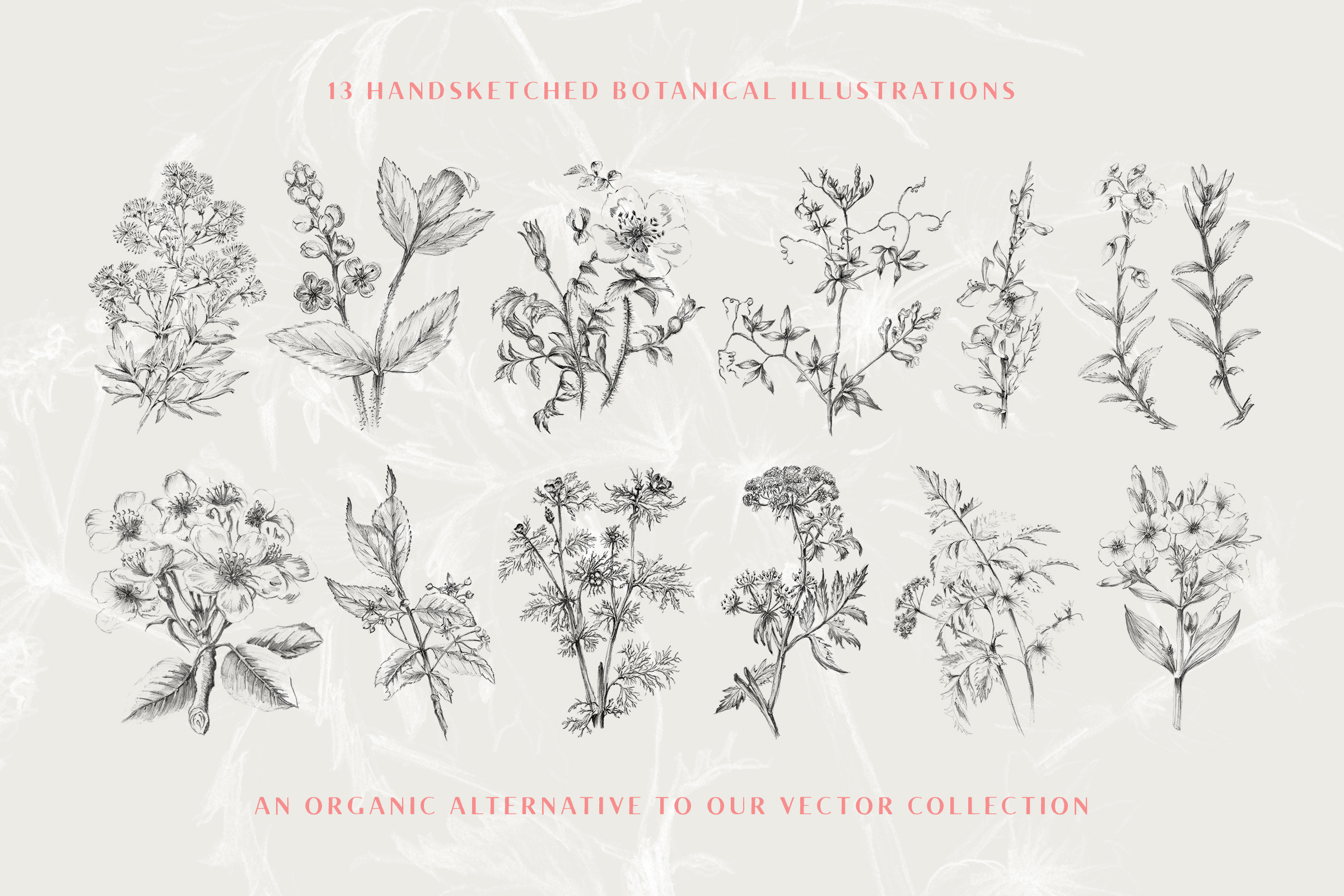 13 Botanical Illustrations Amp Extras