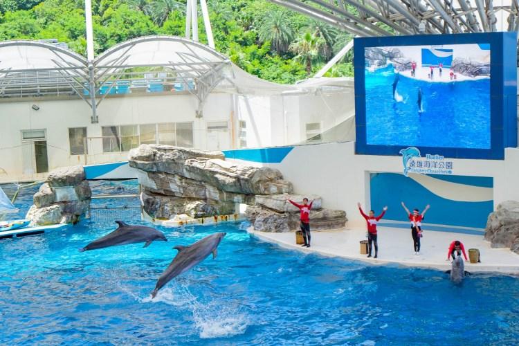 花蓮海洋公園 海洋劇場 海豚表演