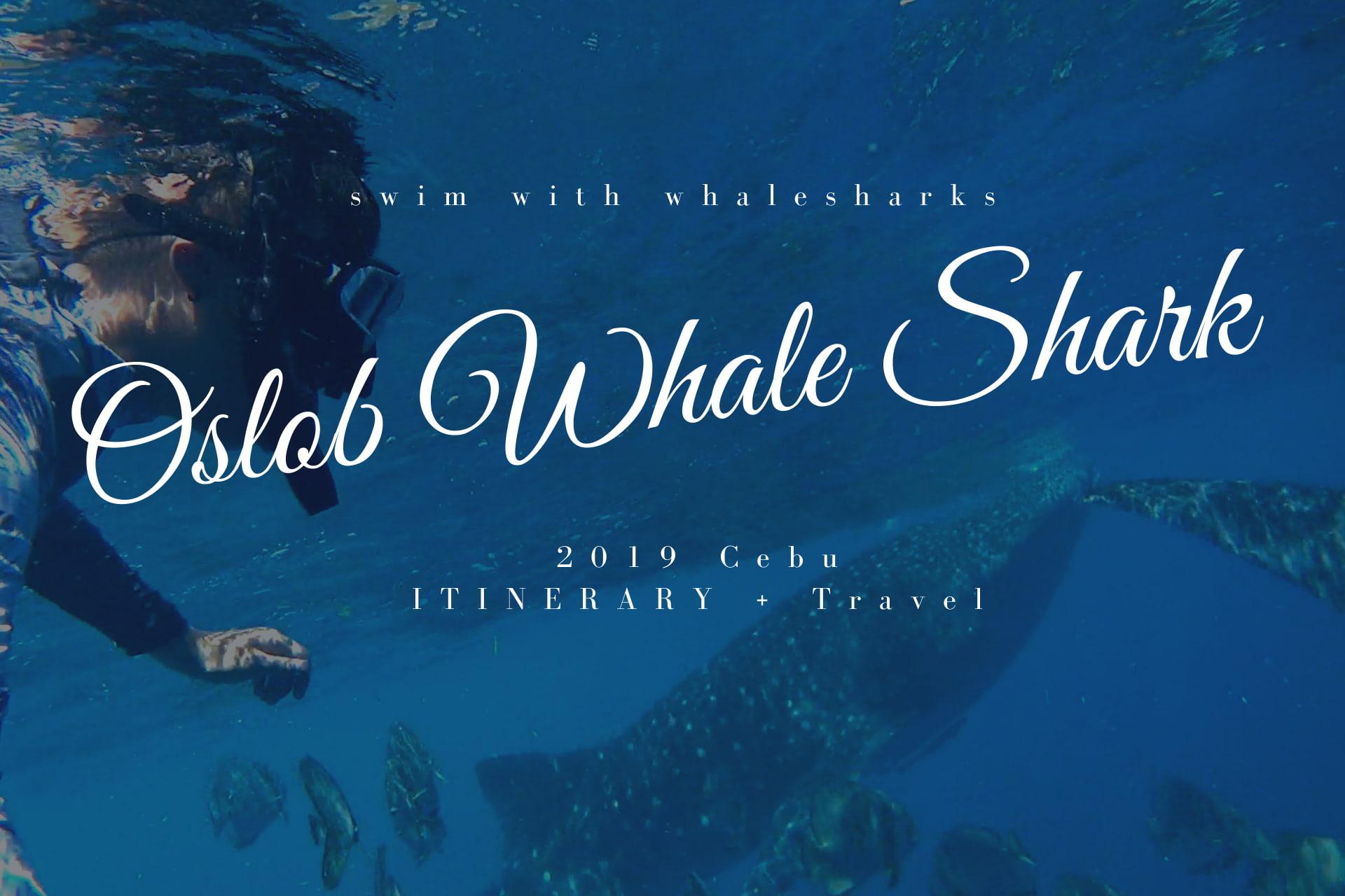 Oslob賞鯨鯊