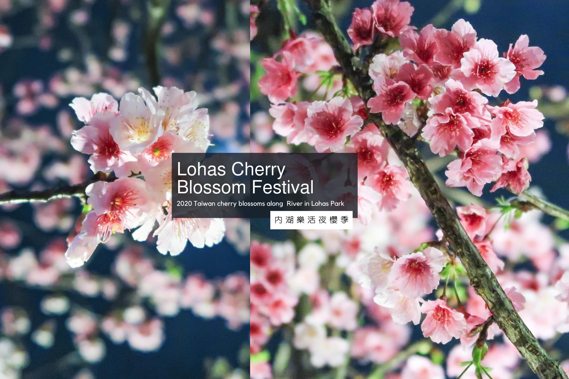 樂活櫻花季