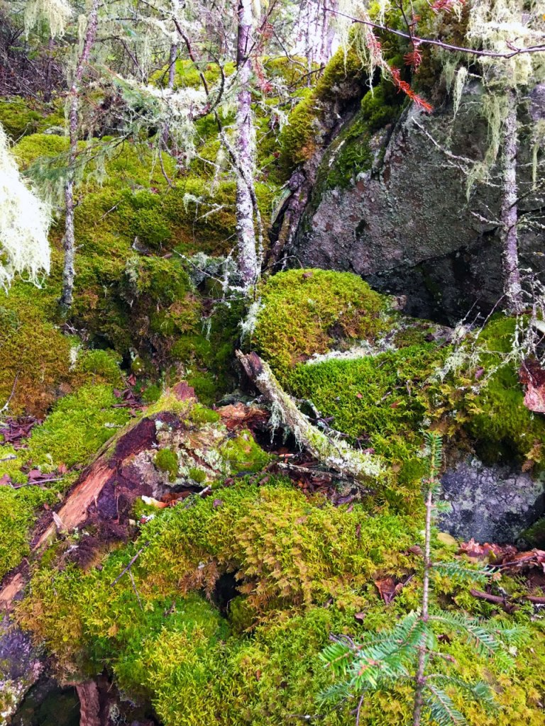 Journeys last lunch stop about 7 miles out of Marathon, Ontario. Moss covered red rocks.