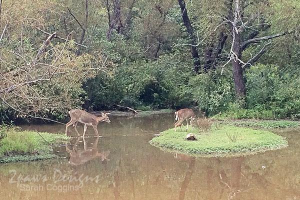 Geocaching + Nature