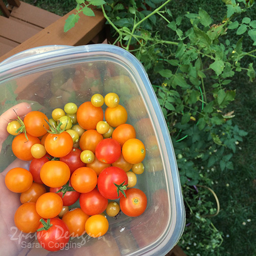 Project 52 Photos: Week 30 – Tomatoes