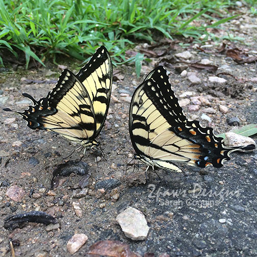 Project 52 Photos 2016: Week 32 Butterflies