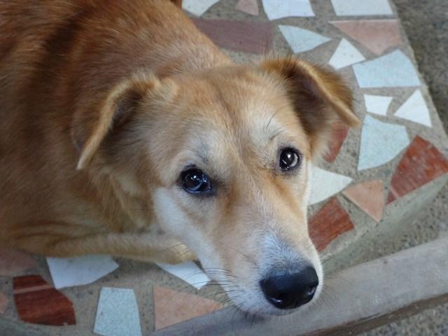 Breakfast Dog at Peak House Garden Pension.