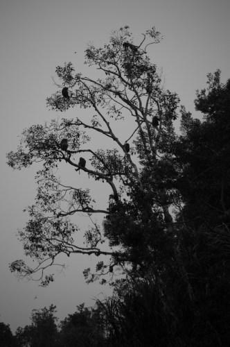 Monkeys at dusk.