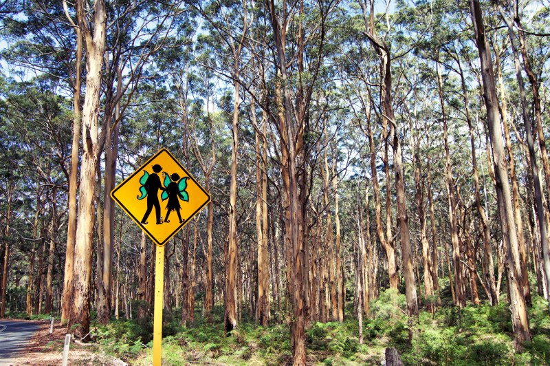 The Boranup Forest.