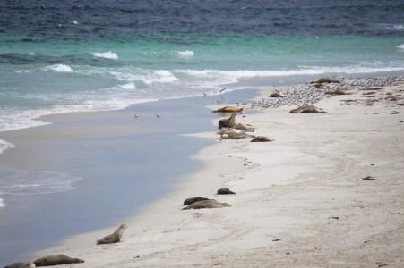 Seal Bay.