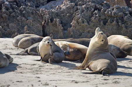 Sea lions on the shore.