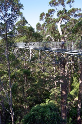 The Valley of the Giants Tree Top Walk.