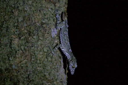 A camouflaged lizard.