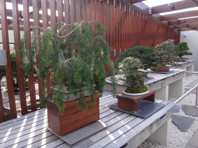 Bonsai trees!