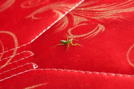 Baby mantis!
