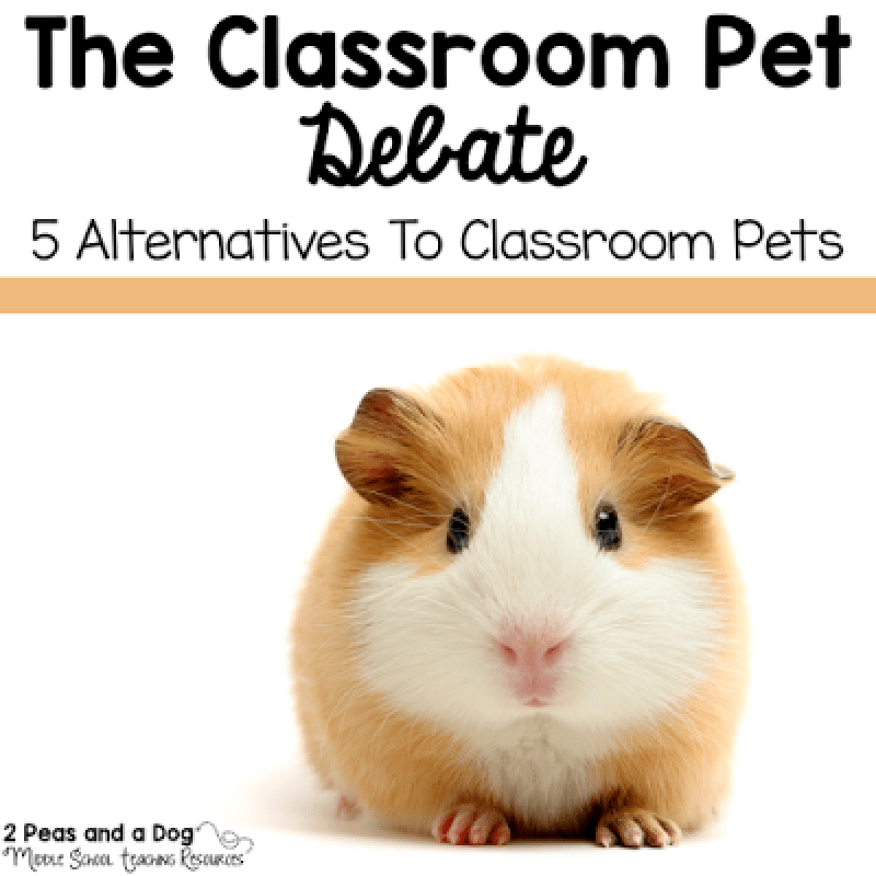 Classroom pets seem like a great idea in theory, but they are not always the best choice. Read about 5 great alternatives to classroom pets from the 2 Peas and a Dog blog.