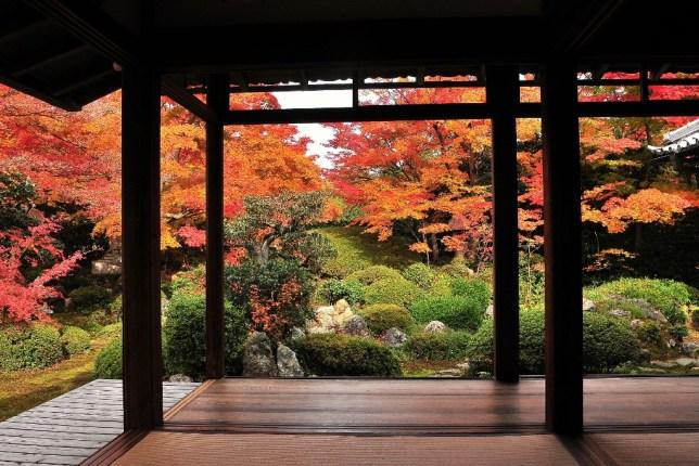autumn sanzenin