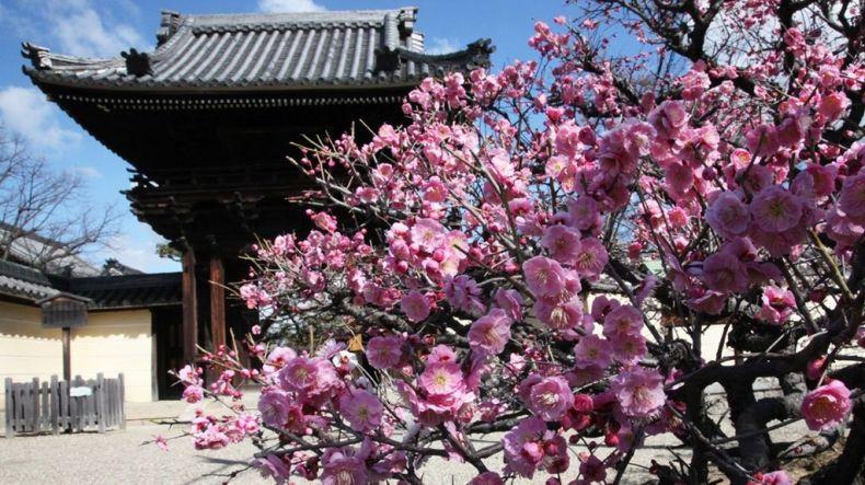 Domyo-ji Temple