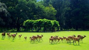 """Shika-yose"" The deer gathering/ Nara @ Nara park 