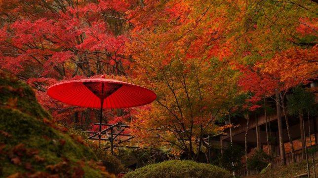 jingo-ji garden