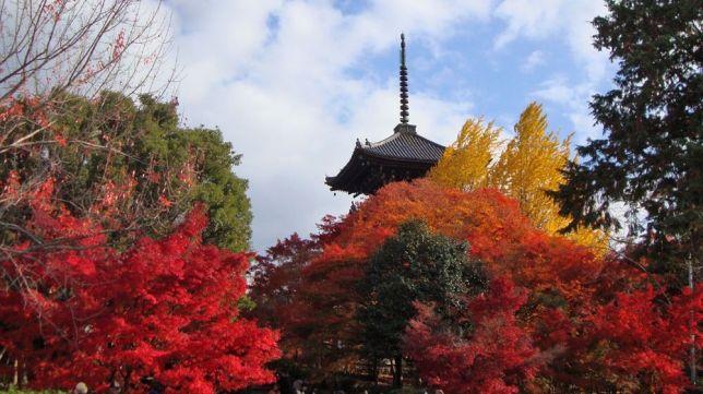 shinnyo-do autumn