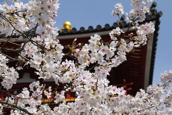 byodo-in spring