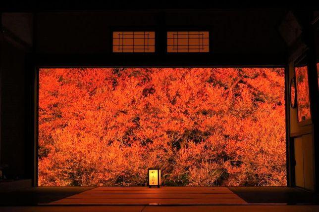 ankoku-ji autumn lit up
