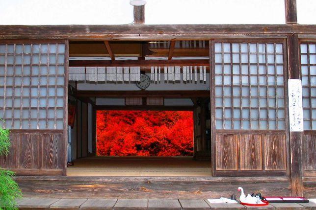 ankoku-ji autumn
