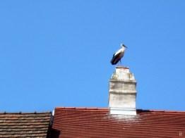 24052008 Rust 03 Storch auf dem Dach