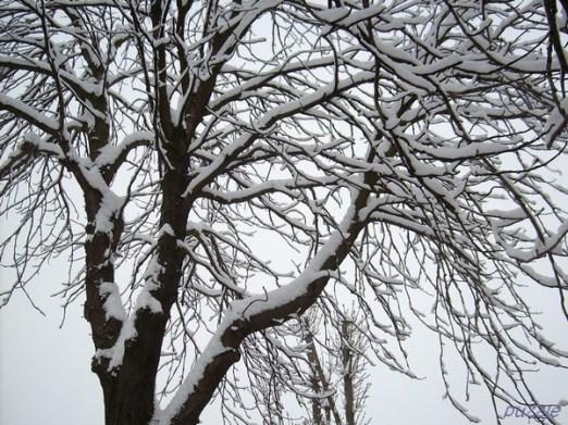 2009-02-23 morgensumkurznachsieben 06