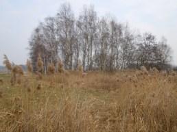 DSCN1509 2011-02-28 bReetze Schilf