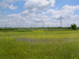22052008 ND Umg Windpark Weiden-Zurndorf 01
